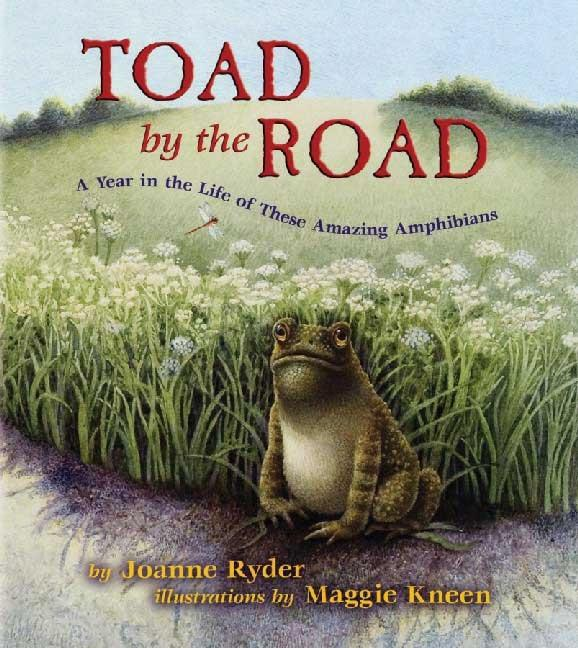 Toad by the Road: A Year in the Life of These Amazing Amphibians